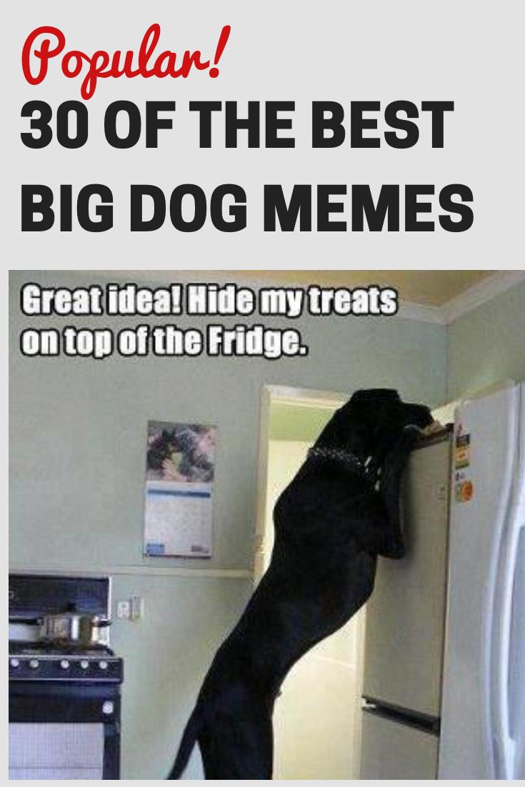 30 Of The Best Big Dog Memes Best Big Dogs Big Dogs Dog Memes