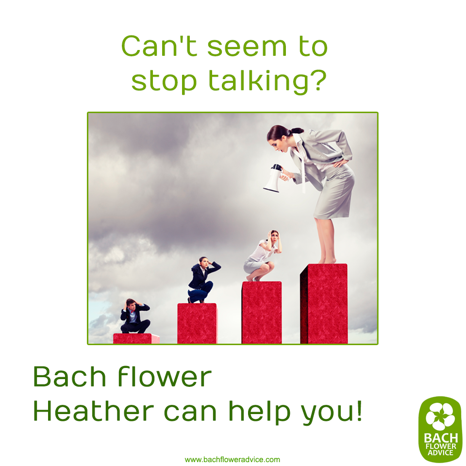 Can T Seem To Stop Talking Bach Flower Remedy Heather Can Help You Heather Bachflowerremedies Bach Flowers Flower Remedy Flower Essences Remedies