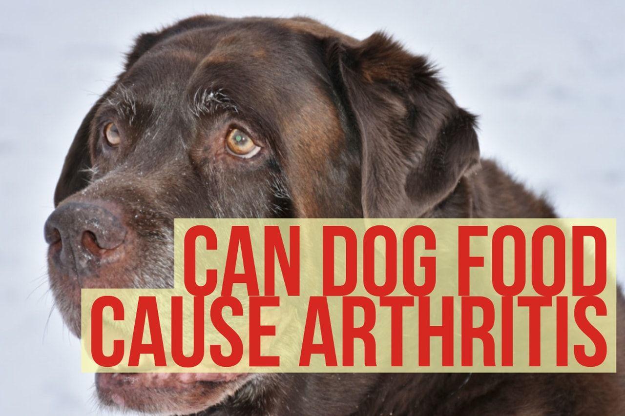Can Dog Food Cause Arthritis Dogfood Dogcare Doghealth
