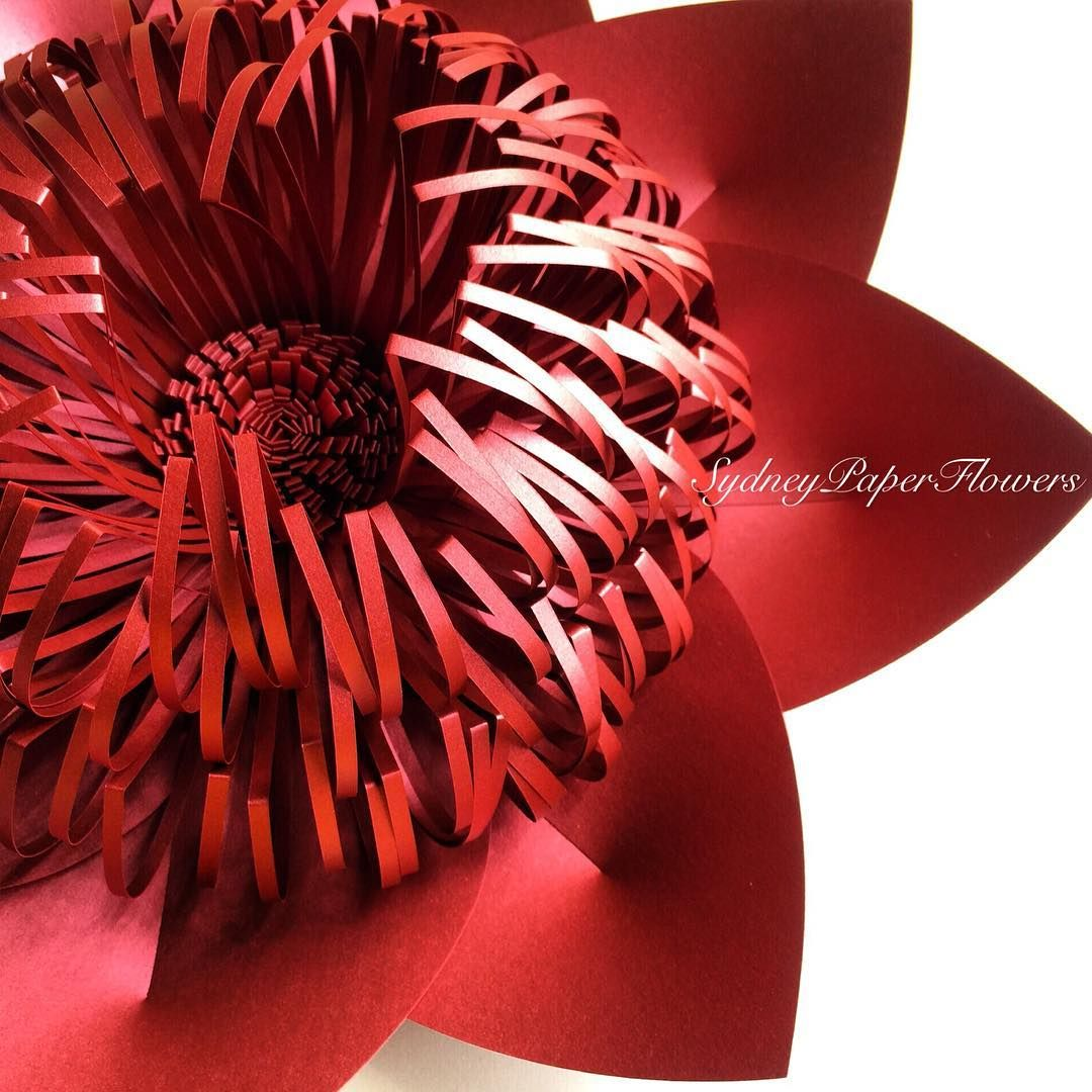 Wow Paper Flowers Sydneypaperflowers Instagram Photos And