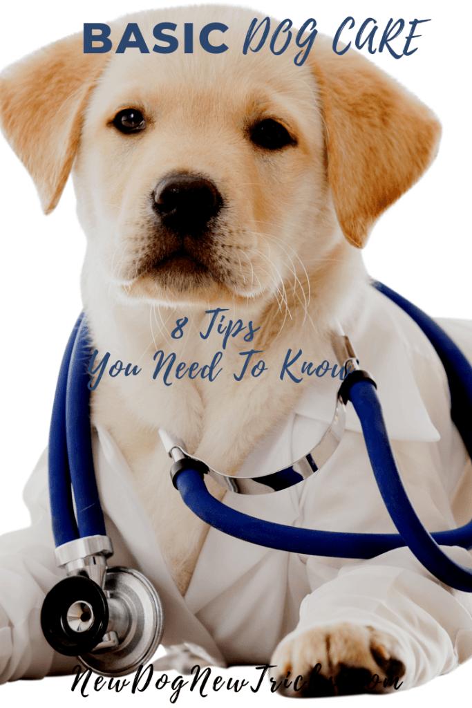 Basic Dog Care Tips You Need To Know Dog Care Dog Insurance Dog Care Tips