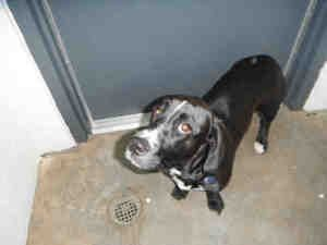 Adopt Mason On Animals Dogs Dogs Of The World