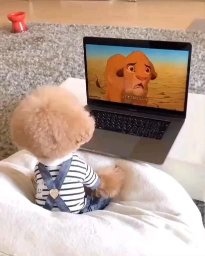 Puppy watching TV