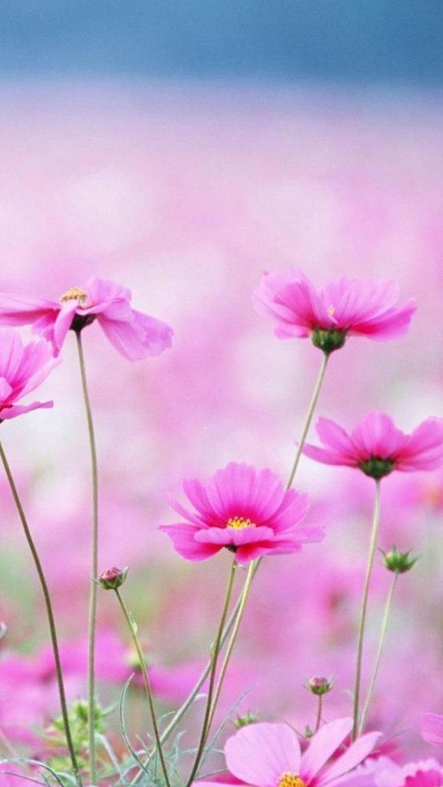 Цветы обои на самсунг
