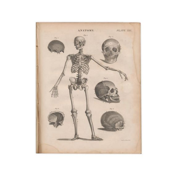 Collection of 25 original medical and anatomy prints from
