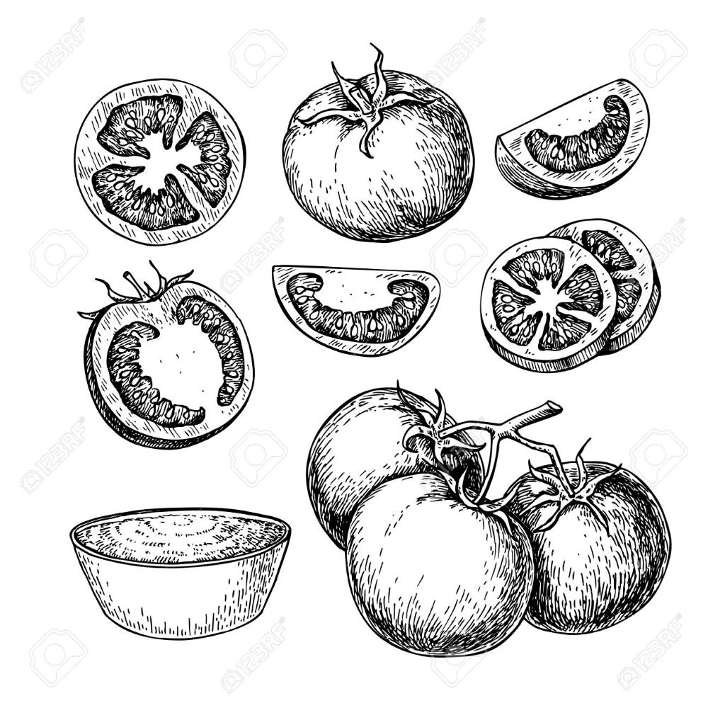 Tomato dessin vectoriel ensemble. tomate isolé, morceau en
