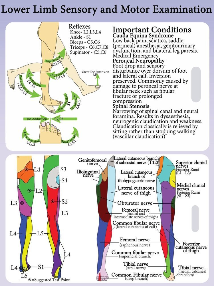 lower extremity dermatomes and myotomes - Google Search Medical