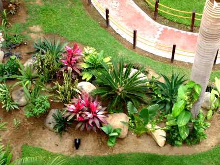 tropical garden plants love the pops of pink scattered sandstone boulders large cycad the post rope fencing along the garden path