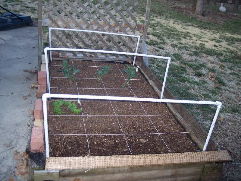 Raised Bed Protected From Squirrels Birds With Pvc Framework And