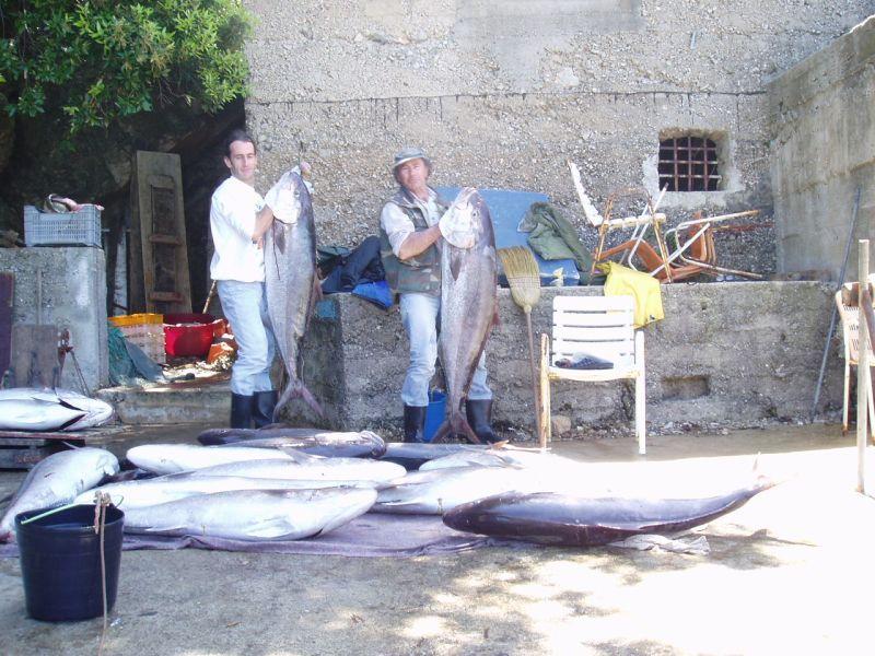 Fisherman`s-house | Molunat http://www.croatia-tourism.eu/ponuda/viewproperty/fisherman-s-house-molunat/554?lang=hr #accommodation #travel #Croatia #Molunat