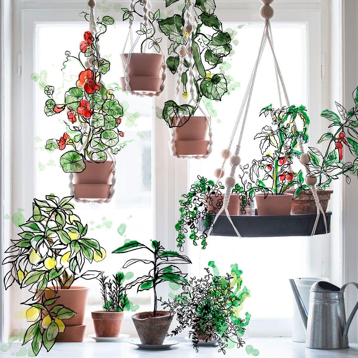 Pin på växter