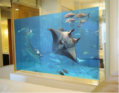 Window Wall Murals for Glass   Kids Bathroom or Shower   Mural Manta Ray. Window Wall Murals for Glass   Kids Bathroom or Shower   Mural
