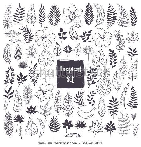 Hand Drawn Doodles Sketches Tropical Leaves Stock Vector (Royalty Free) 626425811