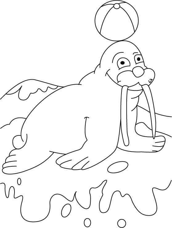 Ball on walrus terrace coloring pages download free ball on | Punch ...