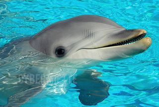 I love dolphins. #cheesy
