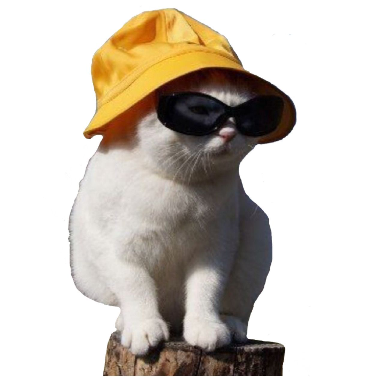Cat In A Hat Png Cats Illustration Cat Aesthetic Yellow Cat