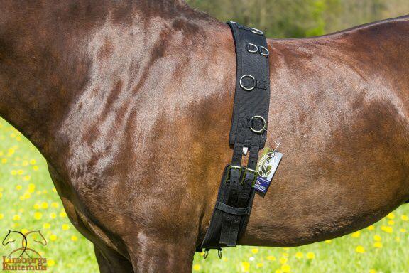 Harry's Horse Longeersingel deLuxe Pony + Cob + Full Normaal €37,95 nu €29,95 www.limburgsruiterhuis.nl   Mei maand is actie maand Met gratis halster, halstertouw of Kingsland sokken: http://eepurl.com/blH3rH Bij besteding vanaf €50  Volg ons op: https://www.facebook.com/limburgruiterhuis
