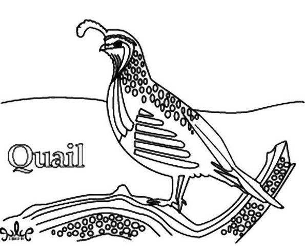Realistic Of Quail Coloring Picture Realistic Drawings Coloring