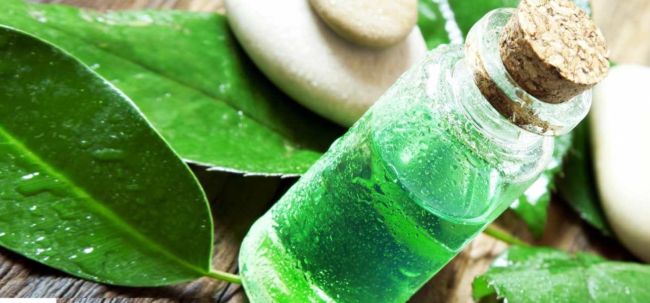 Tea Tree Oil Uses Tea Tree Oil Benefits Tea Tree Oil For Acne
