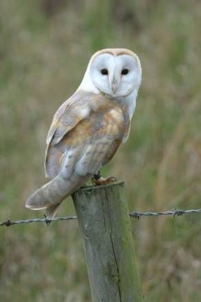 A Barn Owl, just some of the wild life you might spot on ...