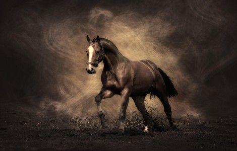 Hd Wallpaper Sephia Horse Colour Horse Wallpaper Horses Horse Painting Brown horse wallpaper hd