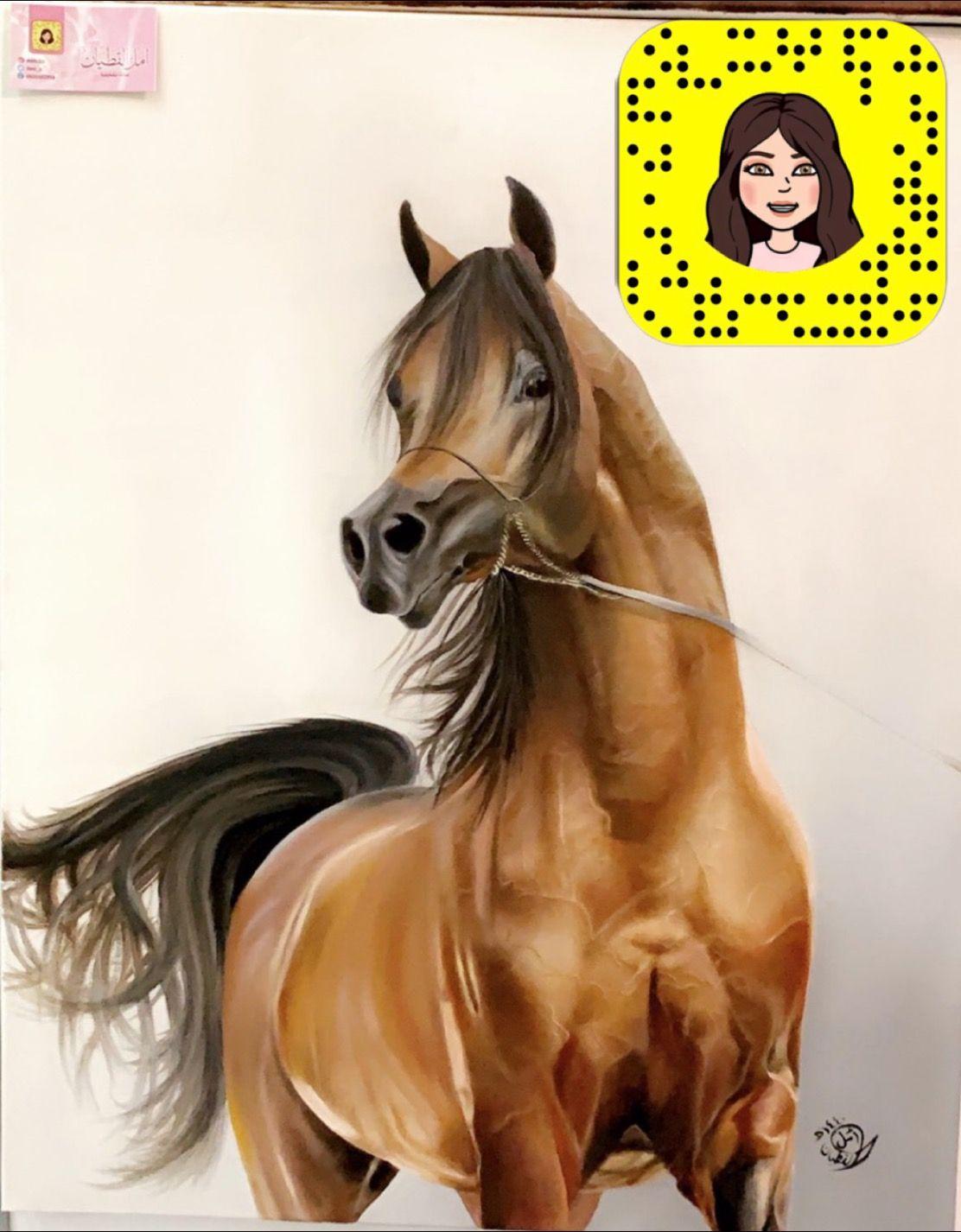Arabian Horse الخيل العربيه Horses Animals Drawings