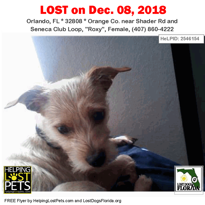 Is this your lost dog or do you recognize him? Orlando