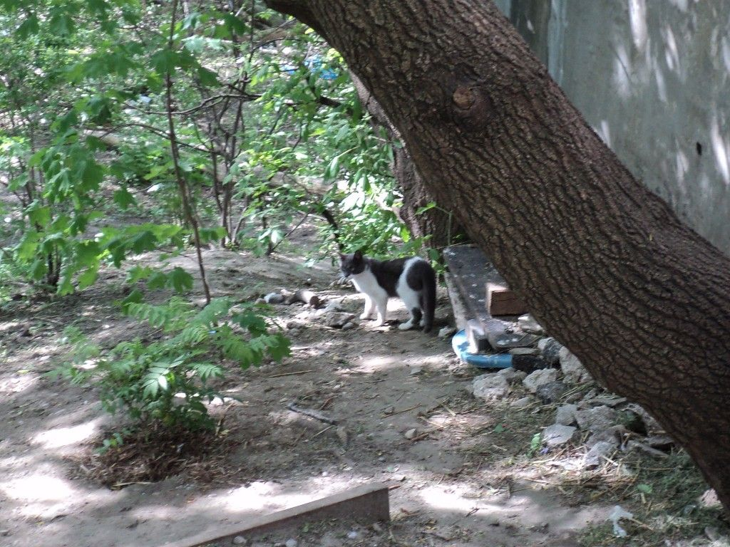 Another new cat scouting out the feral colony! Feral