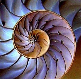 Math And Symmetry In Nature Maths In Nature Nautilus Shell Sacred Geometry Nautilus