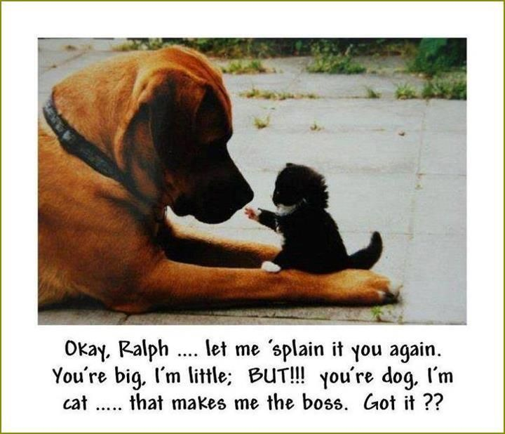 Cats rule...