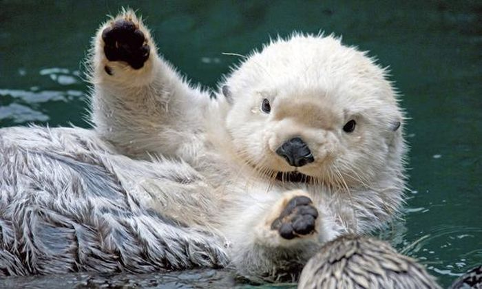 Animals Waving Bye 14 | Animals, Cute animals, Baby sea otters