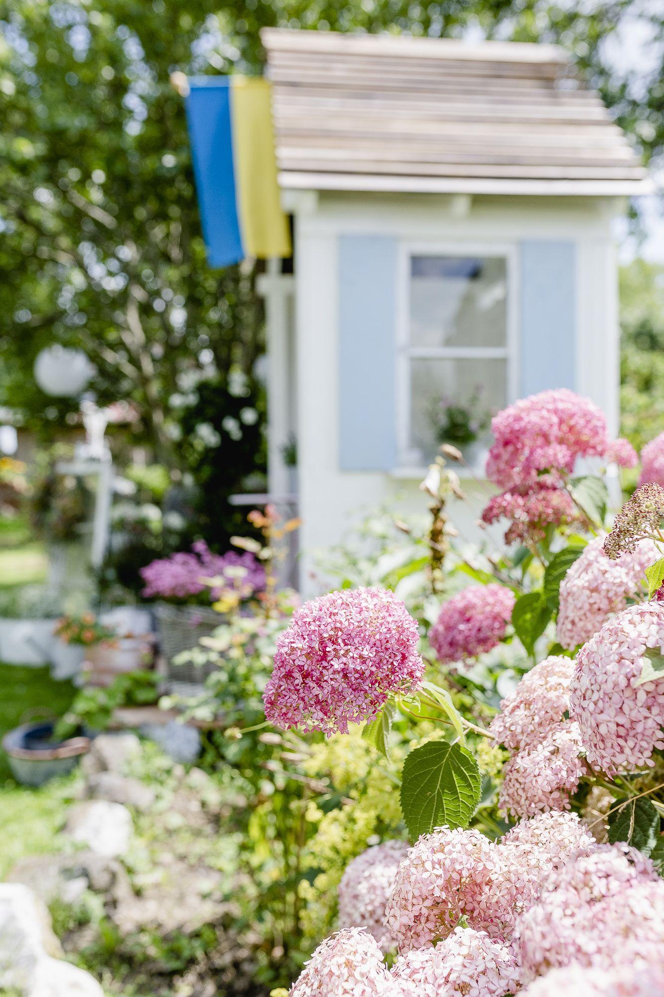 Gugls Mit Schokomousse Und Beeren Rezept Schokomousse Wohnen Und Garten Garten Pflanzen