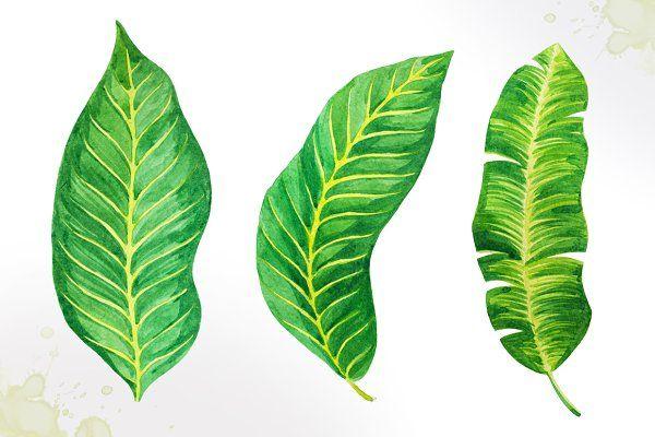 Tropical leaves. Watercolor vector. by AlexGreenArt on @creativemarket
