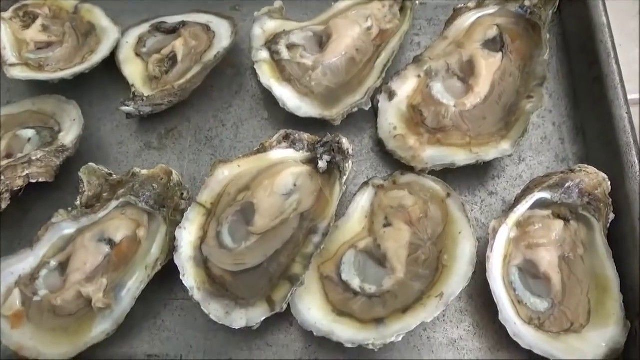 Clean and cook oysters perfectly with images cooked