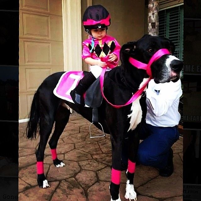 19 couples costume ideas for you and your pet horse costumes 19 couples costume ideas for you and your pet solutioingenieria Gallery