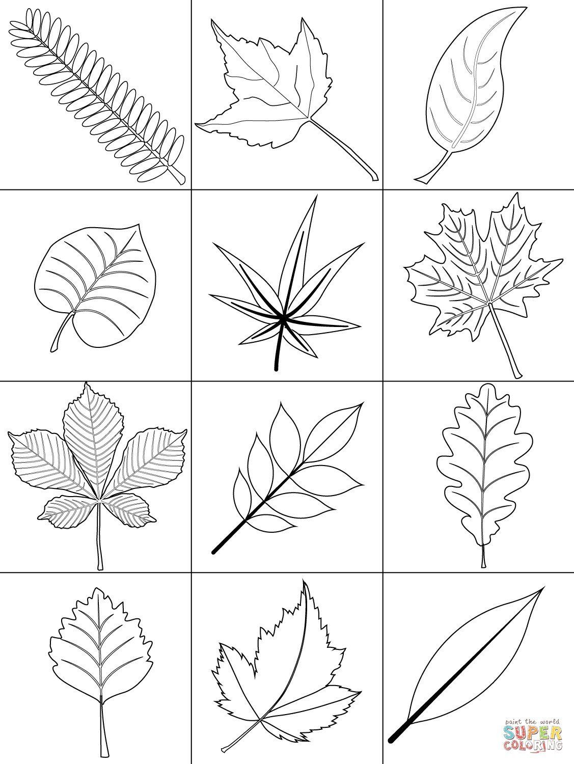 30 Elegant Fall Leaves Coloring Pages in 2020 Fall