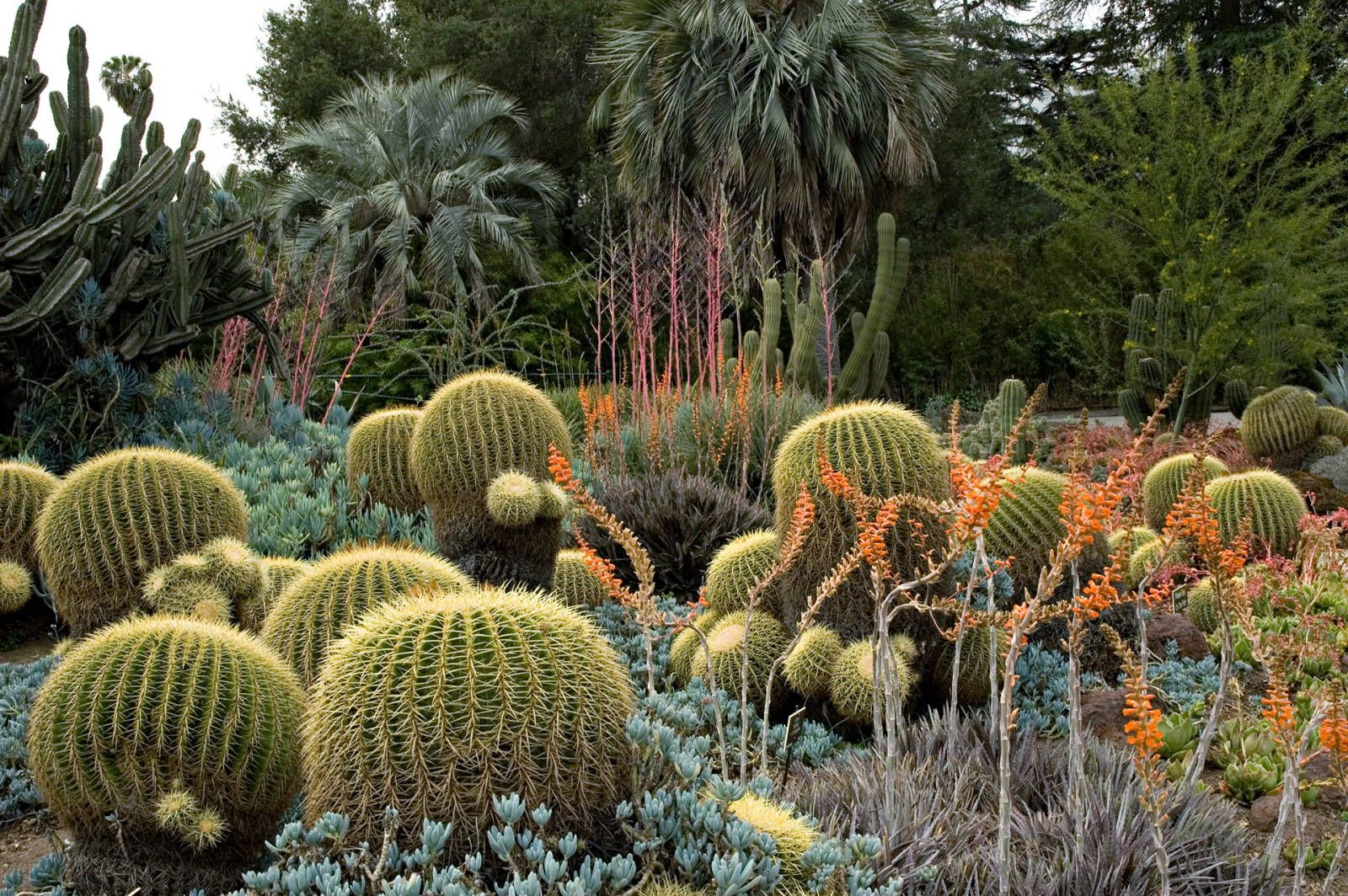 5 Must-Visit Botanical Gardens Across The Country | Cacti, Gardens ...