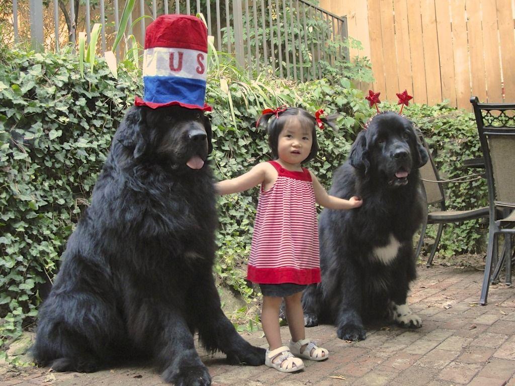 Number 10 best dog breed for KIDS and babies NEWFOUNDLAND