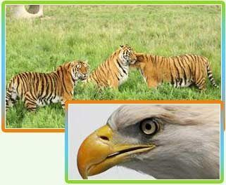 Wildlife Sanctuary is a geographic territory within which the wildlife is reserved. Its a place where animals are brought and are protected for the rest of their lives. Such an area is reserved by a private or a governmental organization. ...Such areas possess a fantastic range of wildlife species and therefore, attract the attention of a lot of people from all around the world.