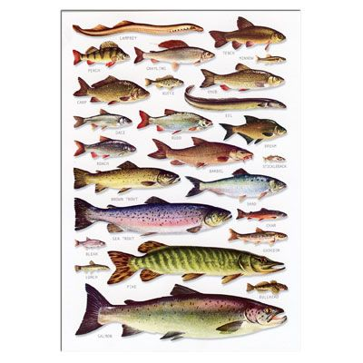 Freshwater Fish Identification Postcard