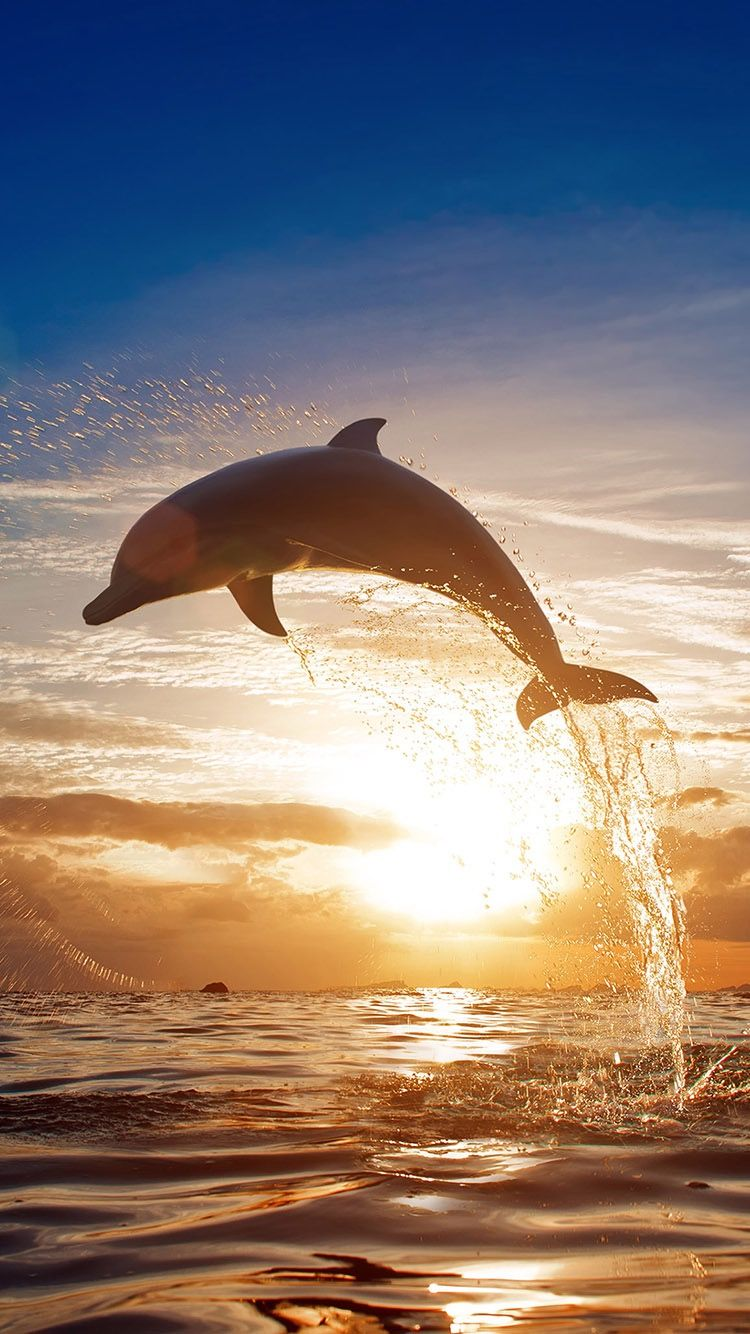 Dolphin at sunset background wallpaper for iPhone SE from