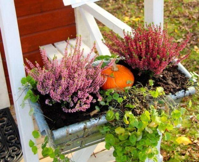 Herbstliche Deko Draussen Blumenkaesten Heidekraut Kuerbis Plants Autumn