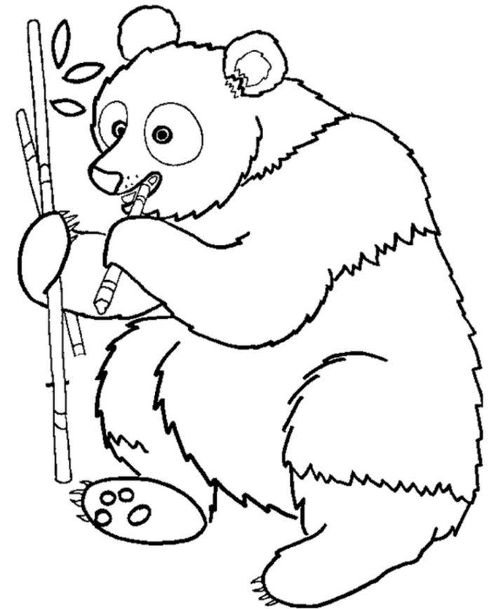 Panda Bear Panda Coloring Pages Animal Coloring Pages Bear