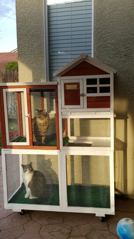 Catio Expanded A Chicken Coop So Cats Have Safe Access To Some Sunbathing Outdoors 24 7 Access To Indoor Outdoor A Outdoor Cat House Cat Enclosure Cat Patio