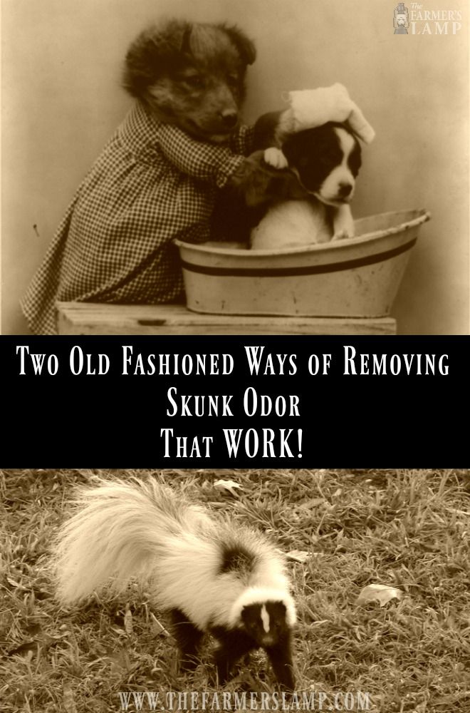 Skunk odor on the family pet or you? You can skip the