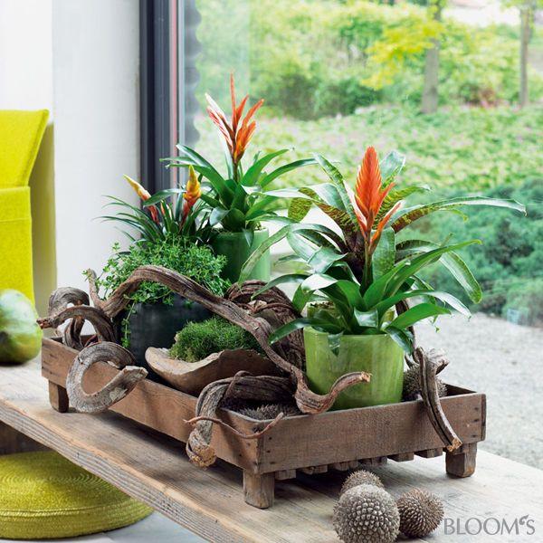 Zimmerpflanzen auf holztablett flowers plants for Topfpflanzen dekorieren