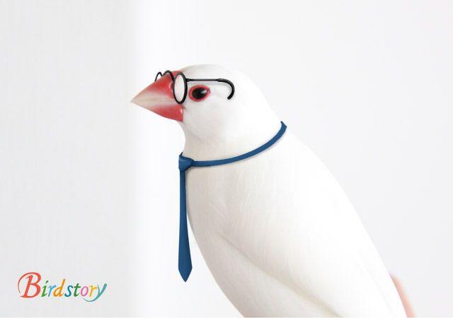 10月1日は メガネの日 Birdstory ペットの鳥 鳥 かわいい 文鳥