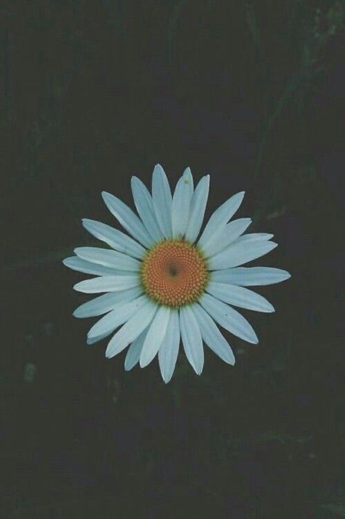 Adventure Alternative Boho Daisy Dark Flower Grunge Hipster Indie Nature Pale Ph Hipster Wallpaper Iphone Wallpaper Vintage Hipster Hipster Pictures