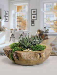 Photo of Planted succulent arrangement in teak bowl Gardening needs planted succulents …
