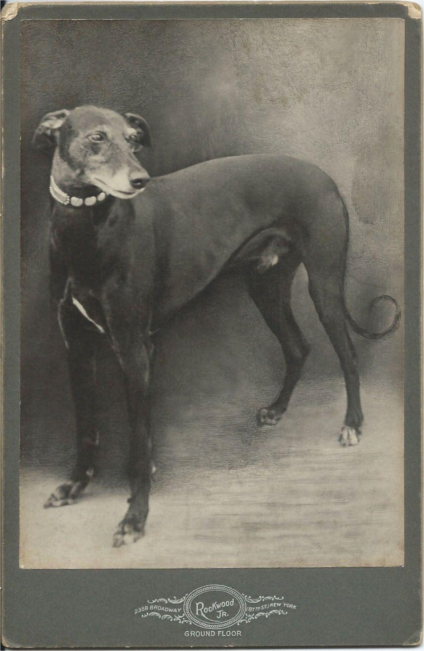 From Bendale Collection Vintage Dog Dog Photos Vintage Cat
